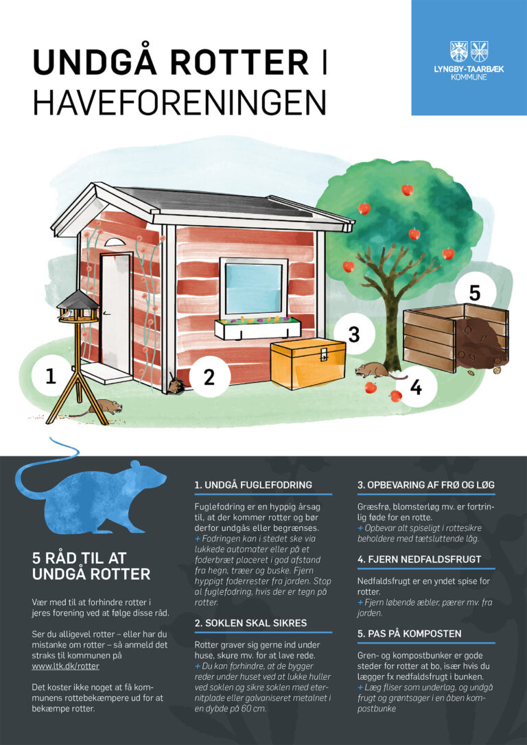 Plakat med info om rotter til Lyngby-Taarbæk kommune