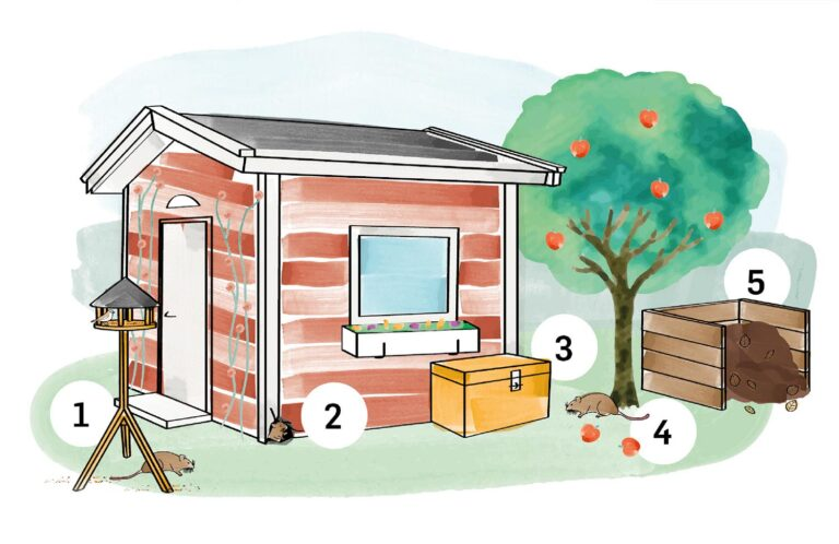 Sommerhus illustration